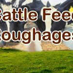 Cattle Feed Roughages